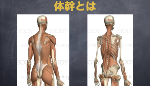 姿勢を矯正したいなら背筋を鍛えよう!スグに取り組める背筋力のテスト方法&背筋の鍛え方