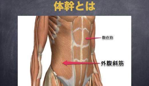 よく耳にする「体幹筋」って、どんな筋肉?理学療法士が分かりやすく解説します